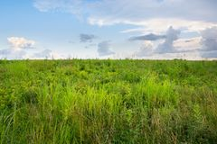 Untamed Meadow Royalty Free Stock Photography