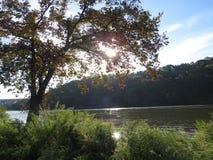 Unten durch den Fluss Stockbilder