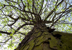 Unten oben, Baum Lizenzfreies Stockfoto