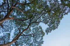 unter Baum auf Hintergrund des blauen Himmels Stockbild