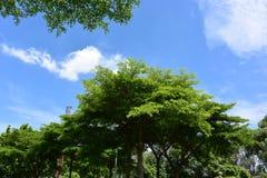 Unter blauem Himmel ist Farbgrünbäume stockfoto