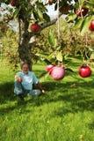 Unter dem Apfelbaum Stockfoto