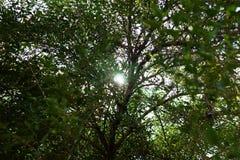 Unter dem Baum lizenzfreie stockfotos