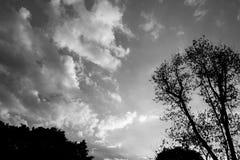 Unter dem Baum im Wald Lizenzfreie Stockbilder