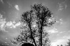 Unter dem Baum im Wald Lizenzfreies Stockfoto