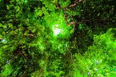 Unter dem Baumhintergrund Stockfoto