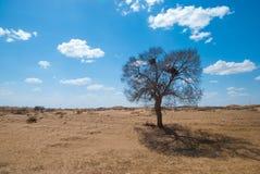 Unter dem blauen Himmel und der weißen Wolke Innere Mongolei Hunshandake Sandy Land lizenzfreie stockfotografie