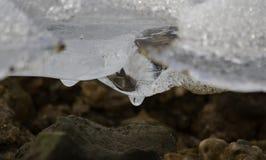 Unter dem Eis Stockbild