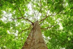 Unter dem Farbton der Bäume. Lizenzfreie Stockfotos