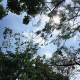 Unter dem glänzenden blauen Himmel Lizenzfreie Stockfotos