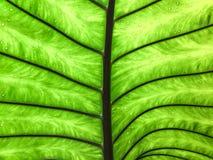 Unter dem grünen Blatt mit Licht auf Wasser lässt Hintergrund fallen Stockbild