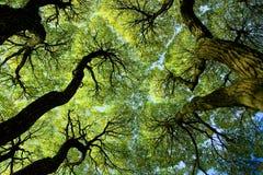 Unter dem Kabinendach der Bäume Stockbild