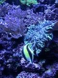 Unter dem Meer lizenzfreies stockfoto
