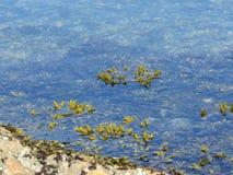 Unter dem Meer stockfotos
