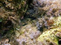 Unter dem Meer Riff Mittelmeer stockfotos