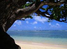 Unter dem Ol Mac-Mutteren-Baum Stockbilder
