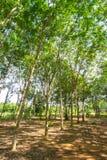 Unter dem Schatten einer Baum Abdeckung der Himmel Lizenzfreies Stockbild