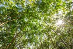 Unter dem Schatten einer Baum Abdeckung der Himmel Lizenzfreies Stockfoto