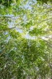 Unter dem Schatten einer Baum Abdeckung der Himmel Stockfotos
