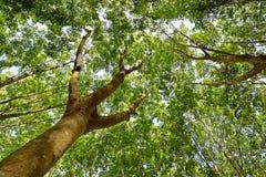 Unter dem Schatten einer Baum Abdeckung der Himmel Stockbild