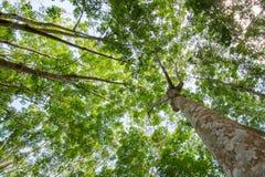 Unter dem Schatten einer Baum Abdeckung der Himmel Stockbilder