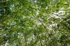 Unter dem Schatten einer Baum Abdeckung der Himmel Stockfoto