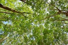 Unter dem Schatten einer Baum Abdeckung der Himmel Lizenzfreie Stockfotografie