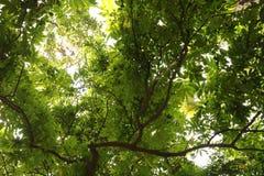 Unter dem Schatten von grünen Blättern im Wald stockbilder