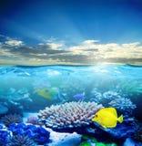 Unter dem Wasserleben lizenzfreies stockfoto