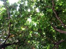 Unter den Bäumen stockbild