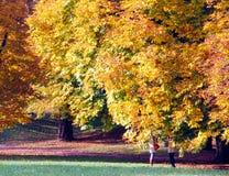 Unter den Bäumen Lizenzfreie Stockbilder