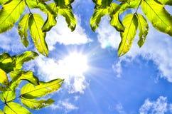 Unter den blauen Himmeln Lizenzfreies Stockfoto