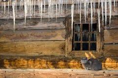 Unter den Eiszapfen Stockbilder