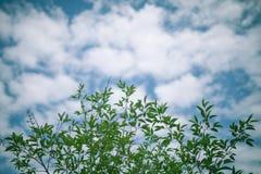 Unter den Grünniederlassungen des blauen Himmels Stockfotografie
