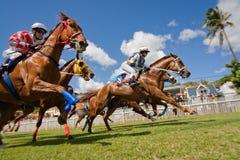 Unter den Pferden Stockfotografie