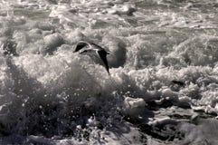 Unter den Wellen Lizenzfreies Stockfoto