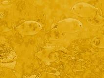 Unter der gesehenen Welt im Gold stockfotografie