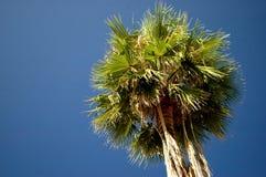Unter der Palme Stockbild