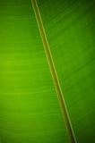 Unter einem Bananenblatt Stockfotos
