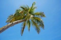 Unter einem Kokosnussbaum mit blauem Himmel im Hintergrund Stockfotografie