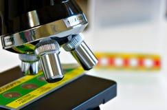 Unter einem Mikroskop Lizenzfreies Stockfoto