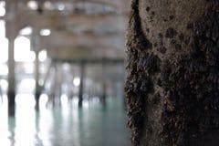 Unter einem Pier Lizenzfreies Stockbild