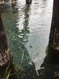 Unter einer Brücke in Henry's-Gabel-Fluss, Idaho lizenzfreies stockfoto