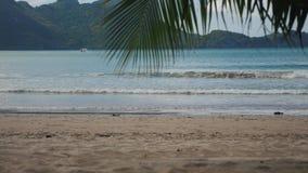 Unter einer Palme auf einem tropischen Strand in Philippinen stock footage