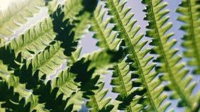 Unter grünem Farn lässt einen sonnigen Tag stock footage