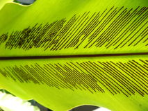 Unter grünem Farnblatt stockfotografie