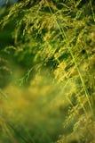 Unter Gras Stockfotos