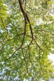 Unter großem grünem Baumhintergrund Lizenzfreie Stockfotos