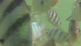 Unter Meer stock video