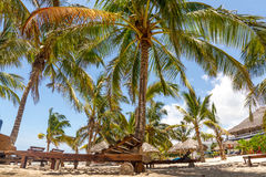Unter Palmen in der Watamu Bay, Kenya Royalty Free Stock Photography
